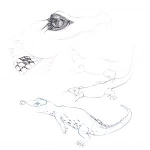 Life Drawing Reptiles