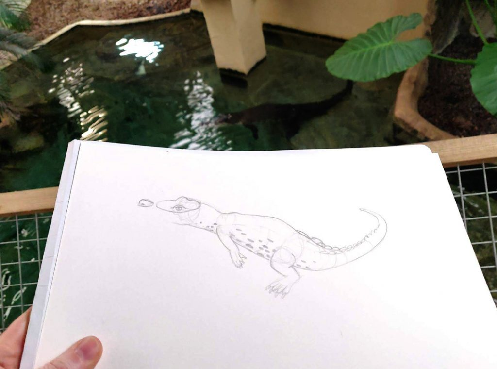 live sketching an adult salt water crocodile