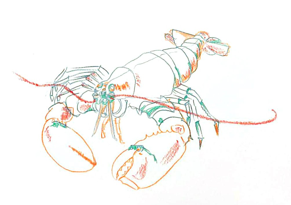 lobster line drawing WIP by Nicola Schofield