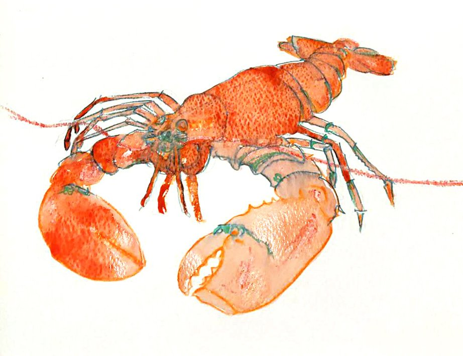 lobster watercolour and mixed media illustration WIP by Nicola Schofield