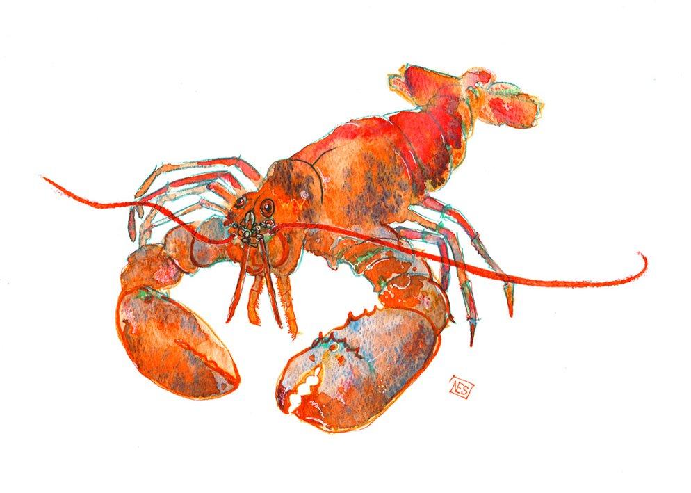 Lobster watercolour