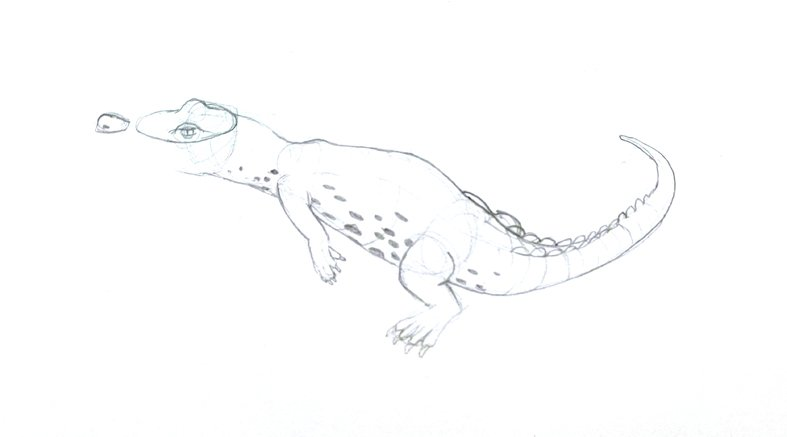 salt water crocodile pencil drawing